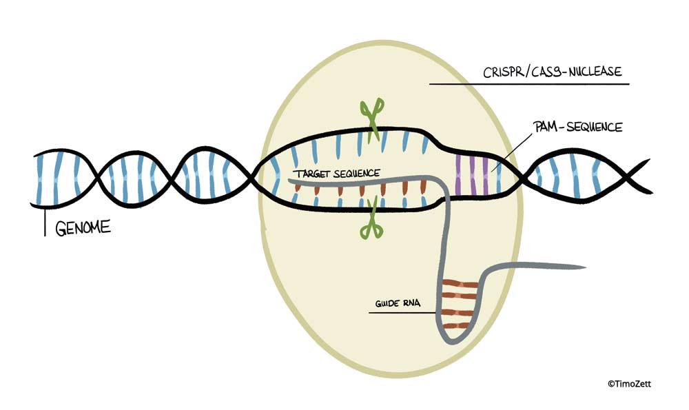 Fachstelle Gentechnik Umwelt - CRISPR/Cas